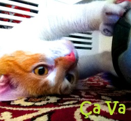 (Foto: Fernanda Franco/ Cat Care)