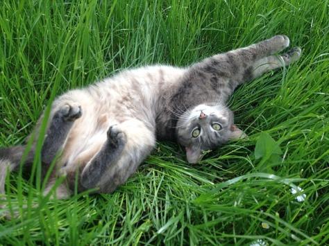 Foto: Reprodução/Portal I Heart Cats