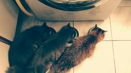 Belinha, Max e Gandalf
